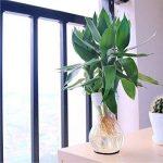 bricolage de fleur en papier facile TOP 6 image 4 produit