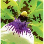 format papier photo 10x15 TOP 1 image 1 produit