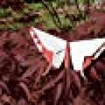Michael LaFosse's Origami Butterflies: Elegant Designs from a Master Folder de la marque Richard L. Alexander image 3 produit