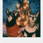 Polaroid Originals 4670 Film couleur pour Appareil Polaroid 600 de la marque Polaroid image 4 produit