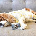 """Polaroid - Papier photo ZINK Premium 2""""x3"""" - LOT DE 30 feuilles - Compatible avec les appareils-photo Polaroid Snap, Z2300 & SocialMatic Instant, et avec l'imprimante Polaroid Zip Instant de la marque Polaroid image 3 produit"""